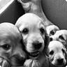 Útulek pro psy Modřany